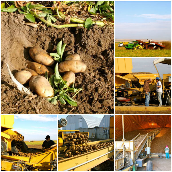 Idaho Potato Harvest Tour